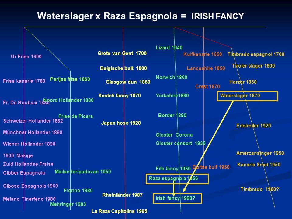 Waterslager x Raza Espagnola = IRISH FANCY