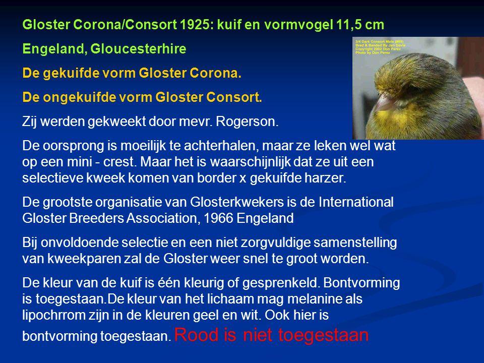 Gloster Corona/Consort 1925: kuif en vormvogel 11,5 cm