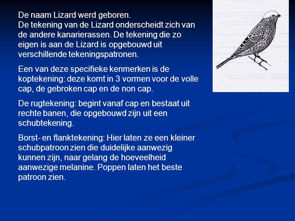De naam Lizard werd geboren.