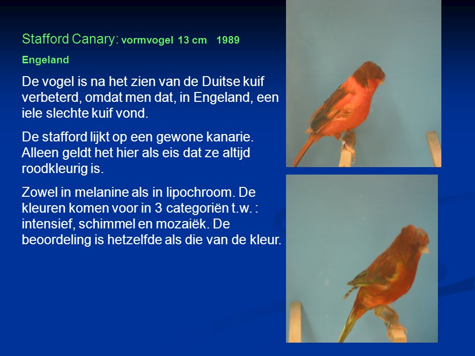 Stafford Canary: vormvogel 13 cm 1989