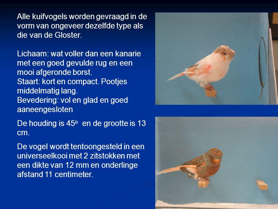 Alle kuifvogels worden gevraagd in de vorm van ongeveer dezelfde type als die van de Gloster.