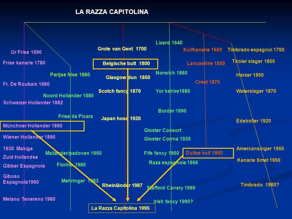 LA RAZZA CAPITOLINA Lizard 1640 Grote van Gent 1700 Kuifkanarie 1650
