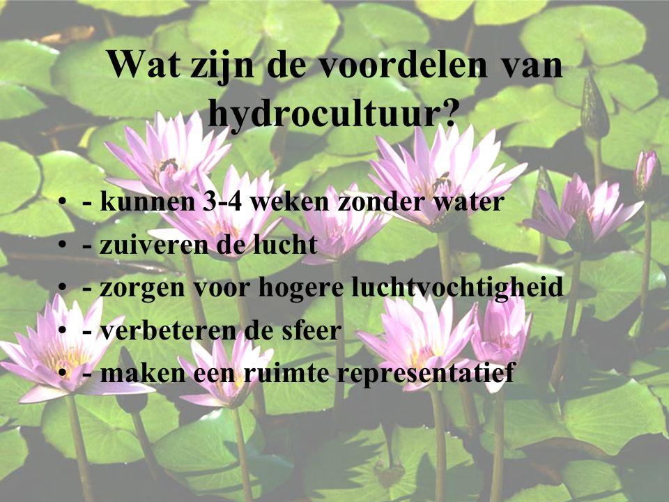 Wat zijn de voordelen van hydrocultuur
