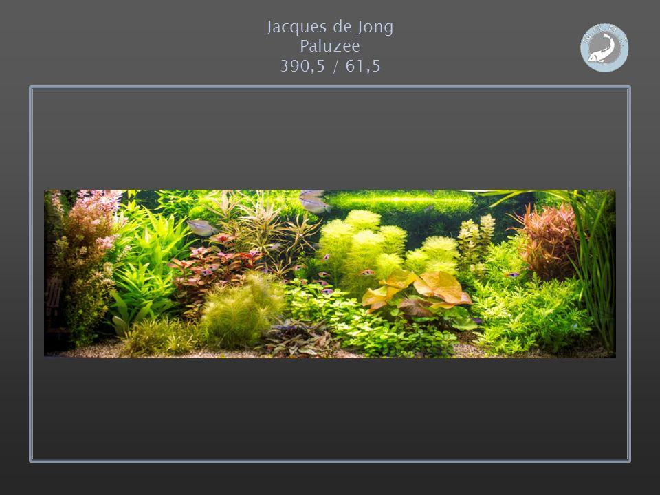 Jacques de Jong Paluzee 390,5 / 61,5