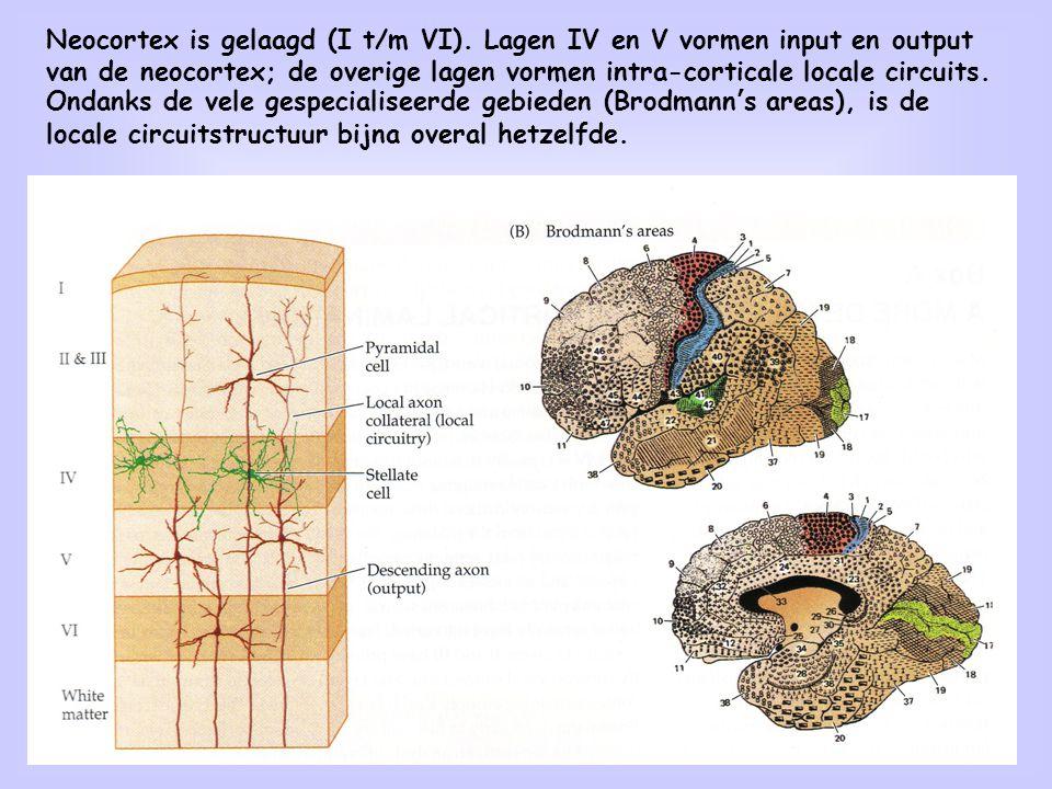De bouwstenen van het brein: