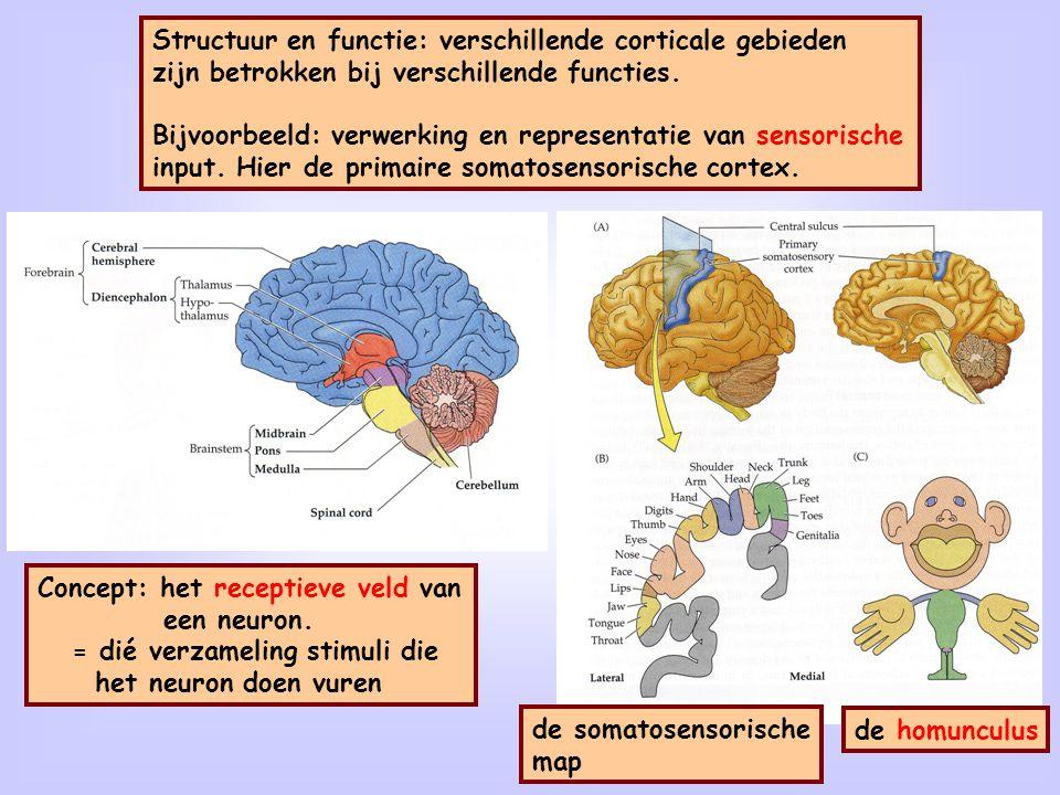 Receptief veld van een neuron