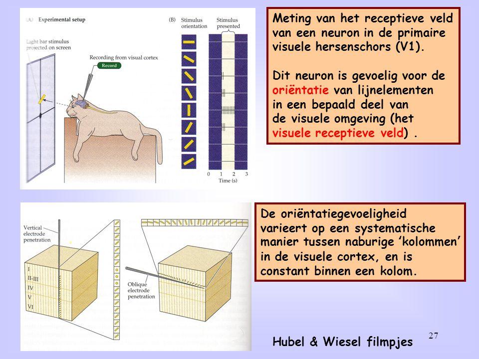 Meting van het receptieve veld van een neuron in de auditieve
