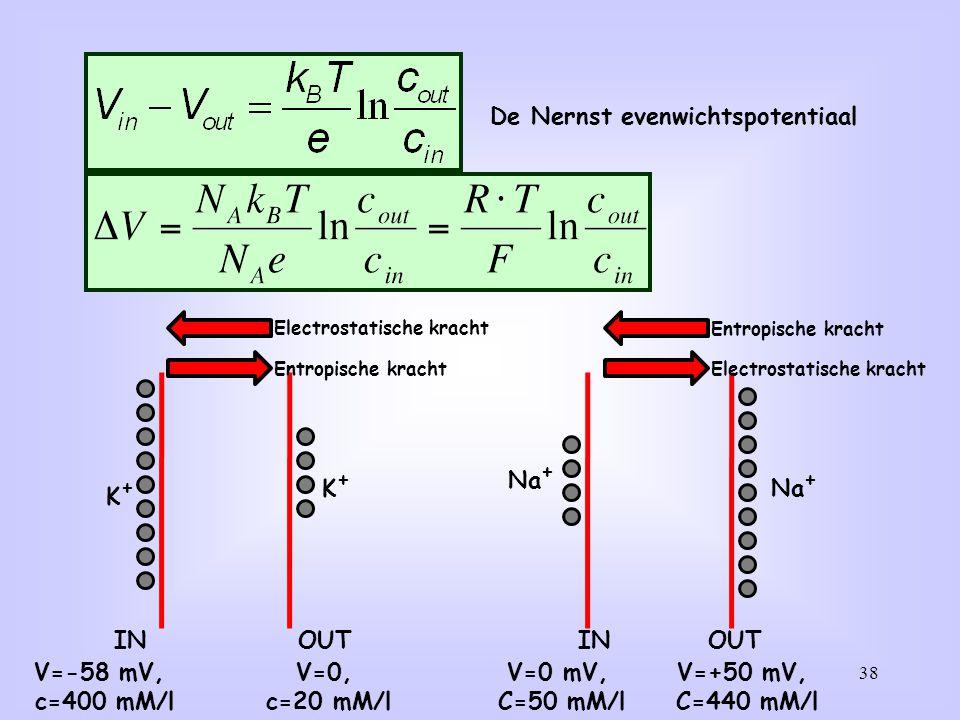 Stel dat het membraan alleen K+ doorlaatbaar is (oranje).