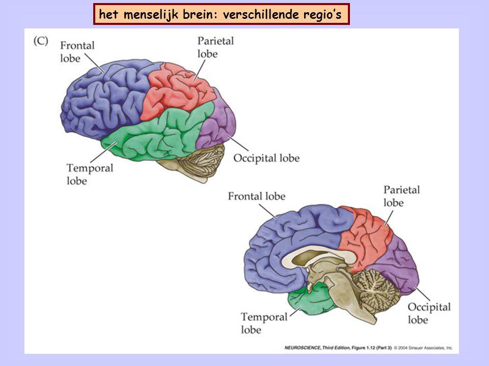 Coördinaten in relatie tot het menselijk brein