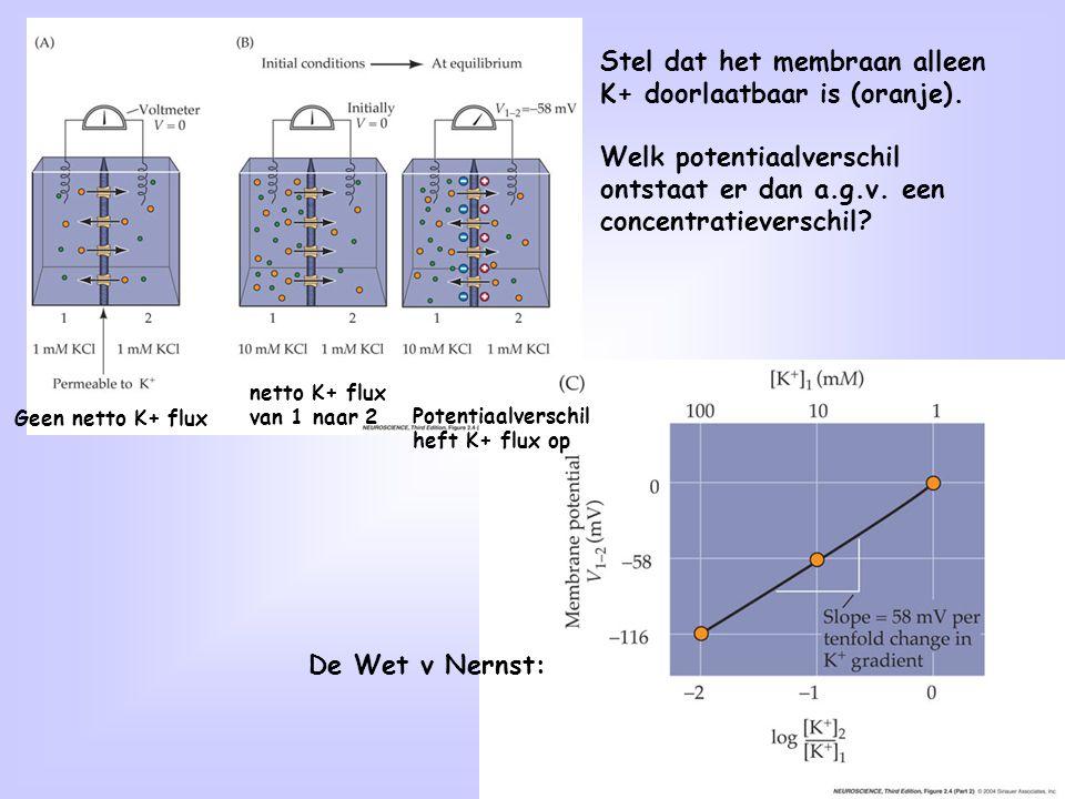 de membraanpotentiaal beïnvloedt de ionconcentraties: -58 mV is de
