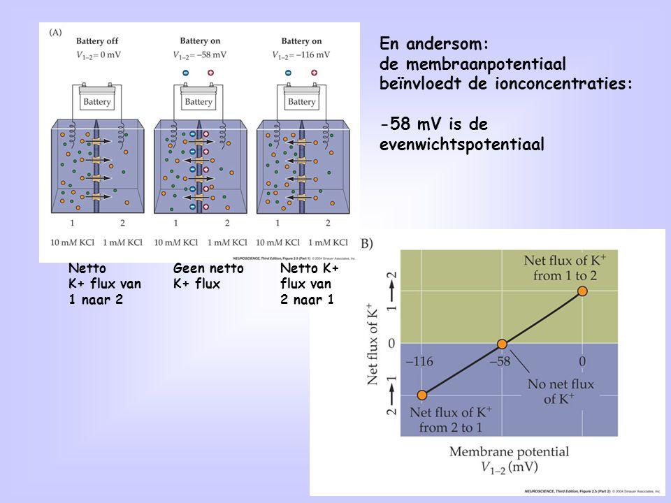 Bij een actiepotentiaal verandert de membraanpotentiaal heel