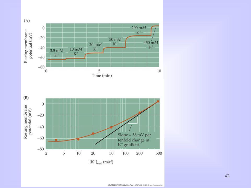 Deze week: Bestudeer: Purves: Hoofdstuk 1, Neuroscience Primer. Syllabus: t/m pag. 24. Maak: Werkcollege: Opg. 1 + 2 pag. 17/18.
