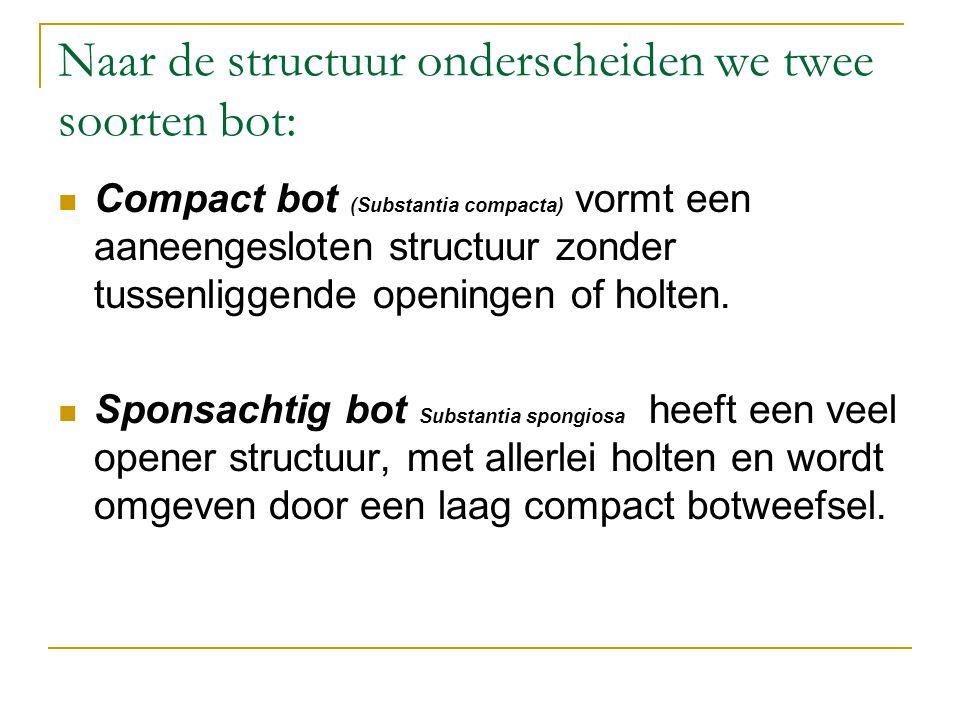 Naar de structuur onderscheiden we twee soorten bot: