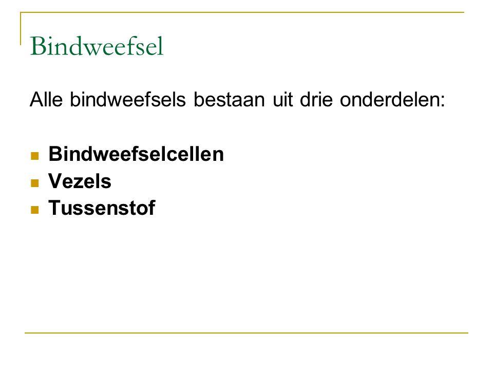 Bindweefsel Alle bindweefsels bestaan uit drie onderdelen: