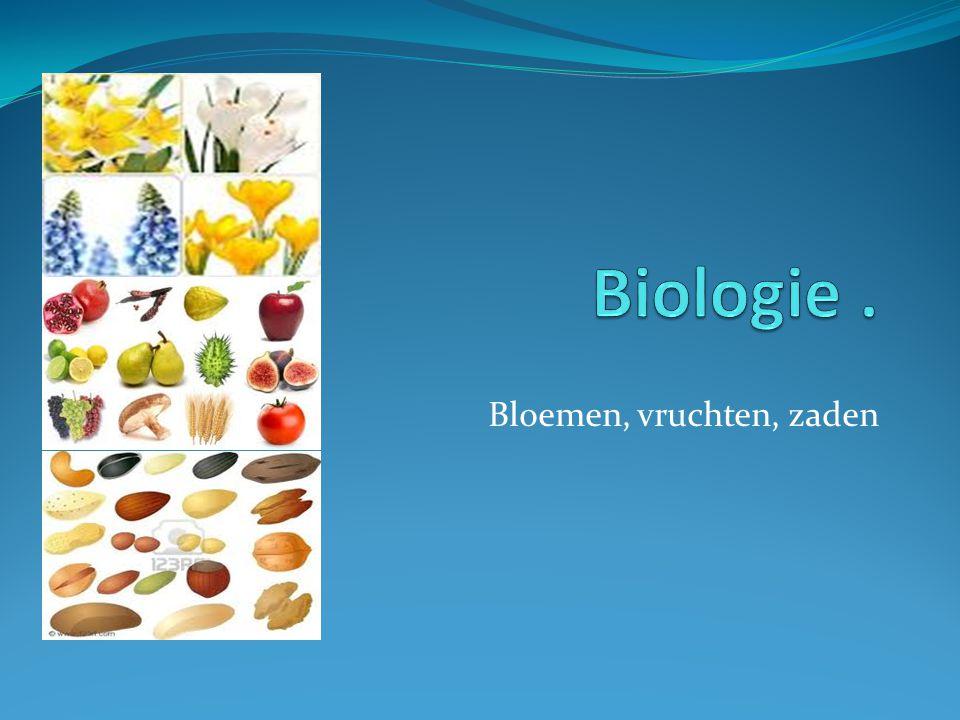 Bloemen, vruchten, zaden