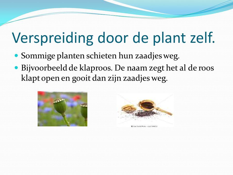 Verspreiding door de plant zelf.