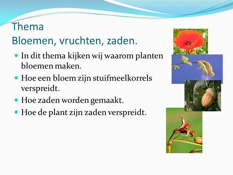 Thema Bloemen, vruchten, zaden.
