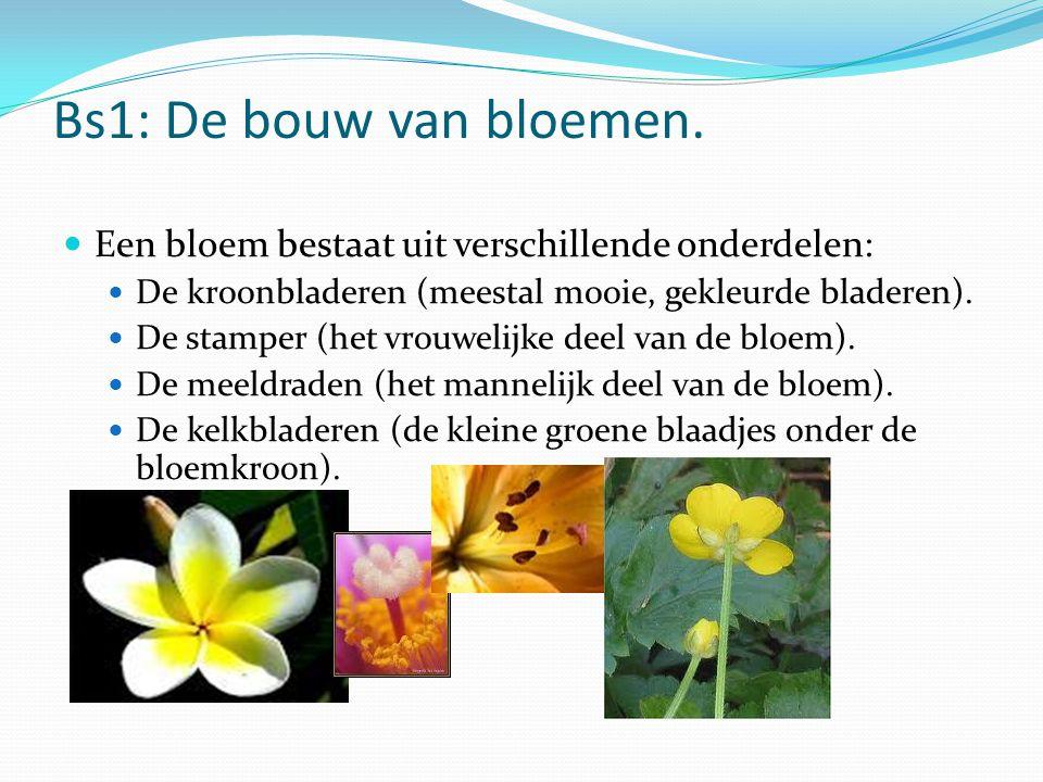 Bs1: De bouw van bloemen. Een bloem bestaat uit verschillende onderdelen: De kroonbladeren (meestal mooie, gekleurde bladeren).