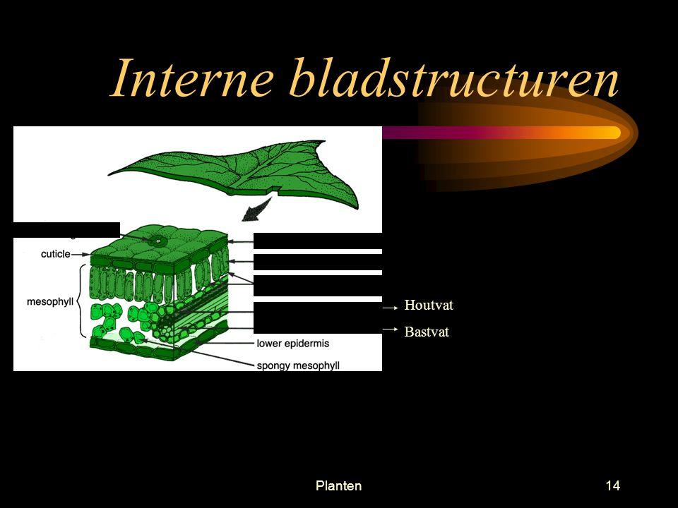 Interne bladstructuren