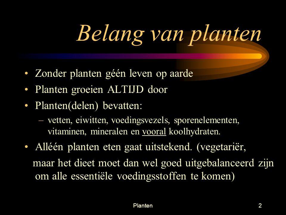 Belang van planten Zonder planten géén leven op aarde