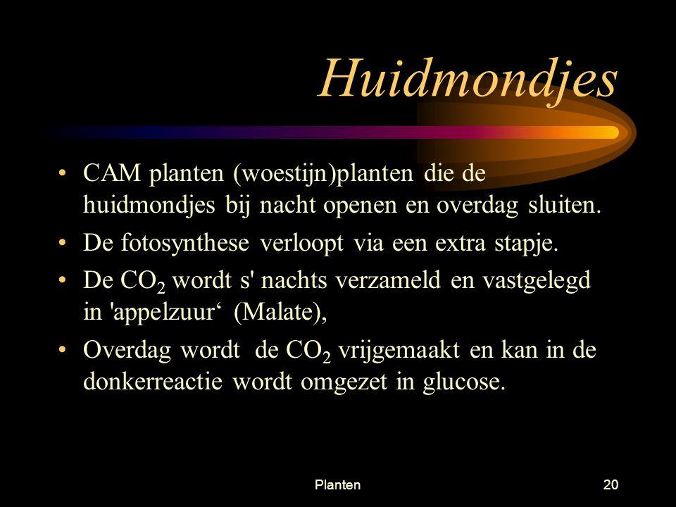 Huidmondjes CAM planten (woestijn)planten die de huidmondjes bij nacht openen en overdag sluiten. De fotosynthese verloopt via een extra stapje.