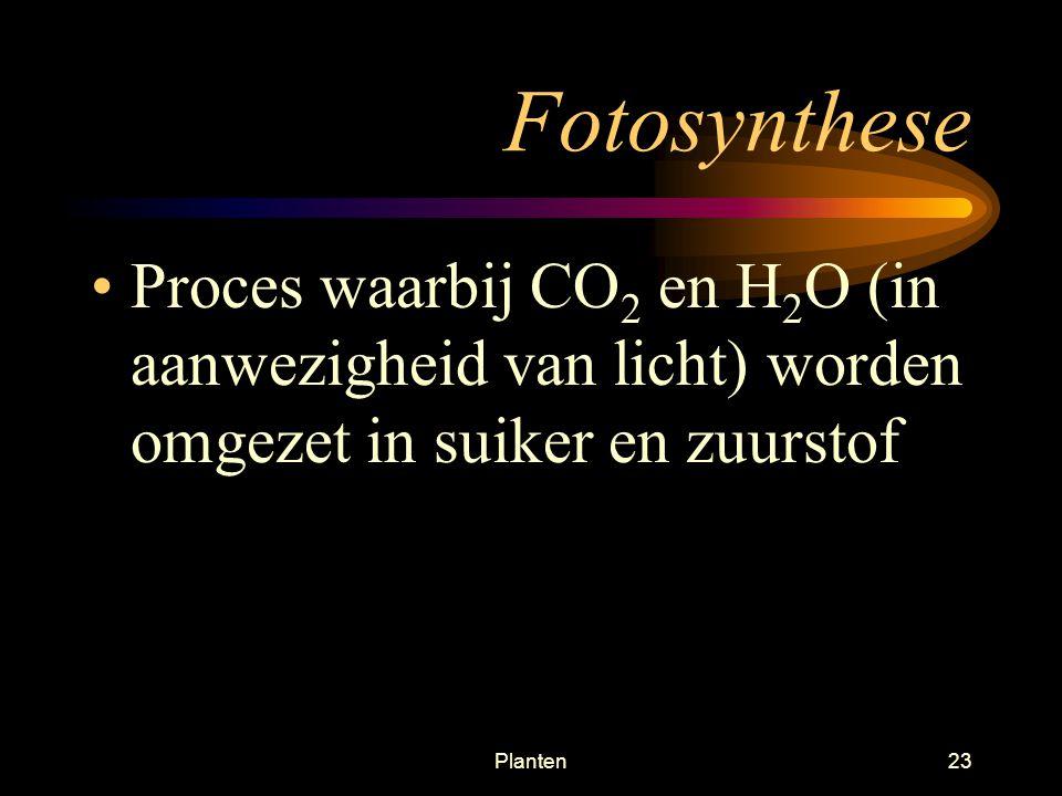 Fotosynthese Proces waarbij CO2 en H2O (in aanwezigheid van licht) worden omgezet in suiker en zuurstof.