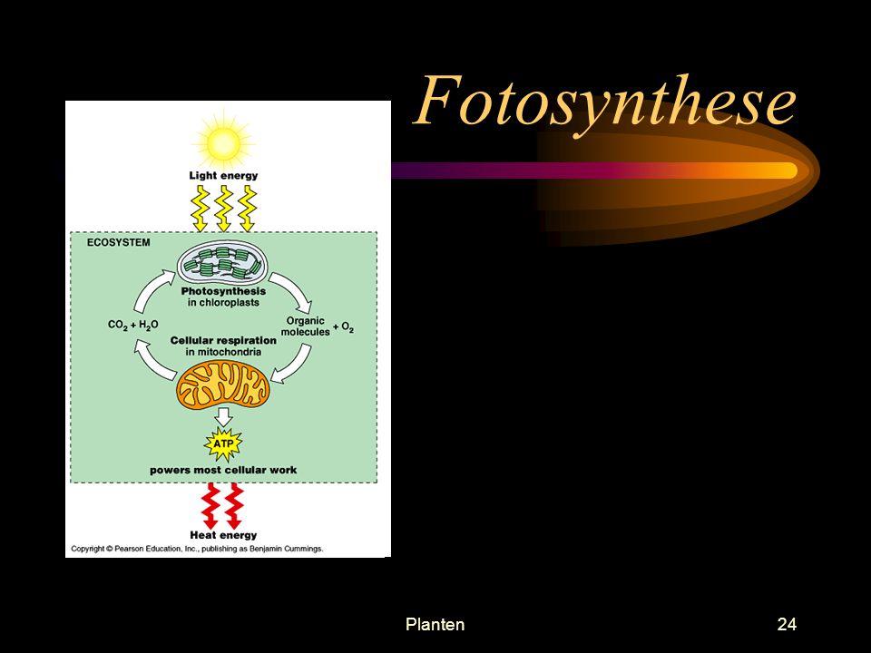 Fotosynthese Planten