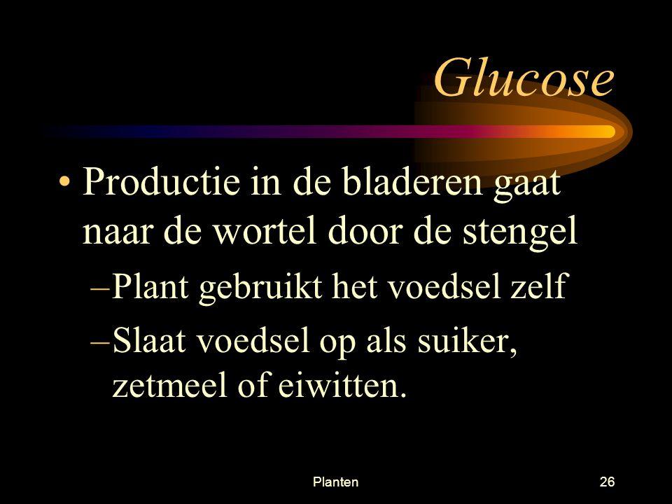 Glucose Productie in de bladeren gaat naar de wortel door de stengel