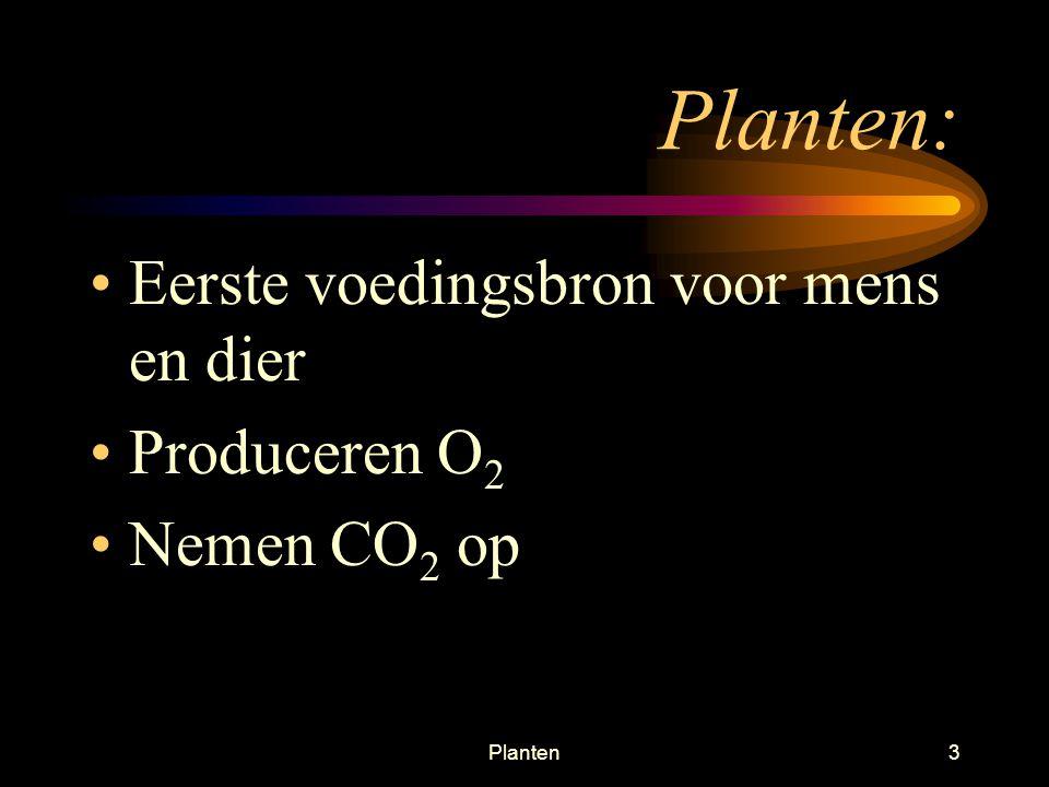 Planten: Eerste voedingsbron voor mens en dier Produceren O2
