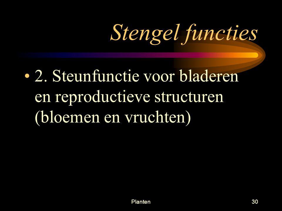 Stengel functies 2.
