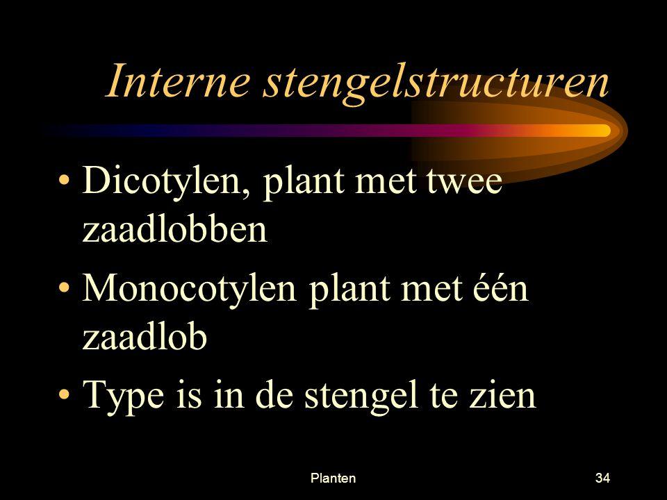 Interne stengelstructuren