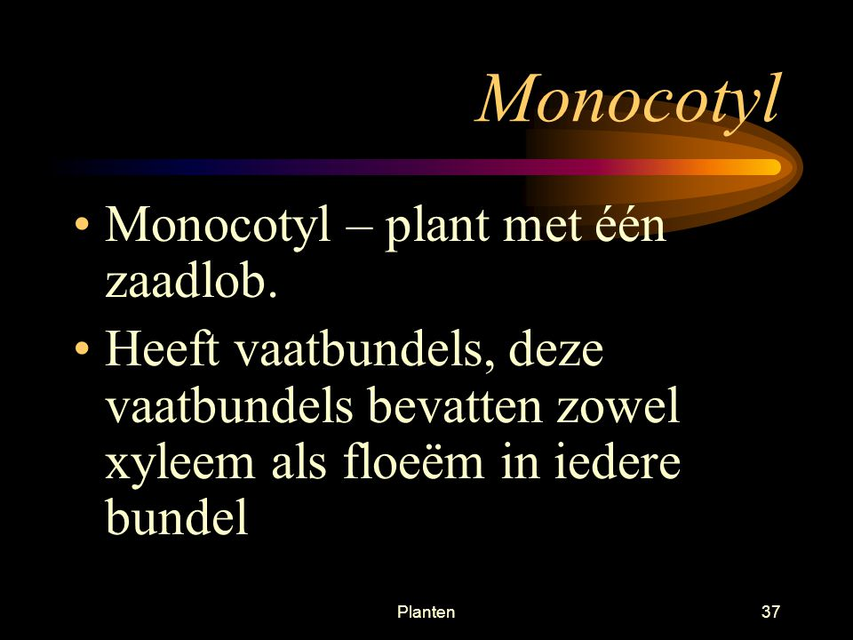 Monocotyl Monocotyl – plant met één zaadlob.