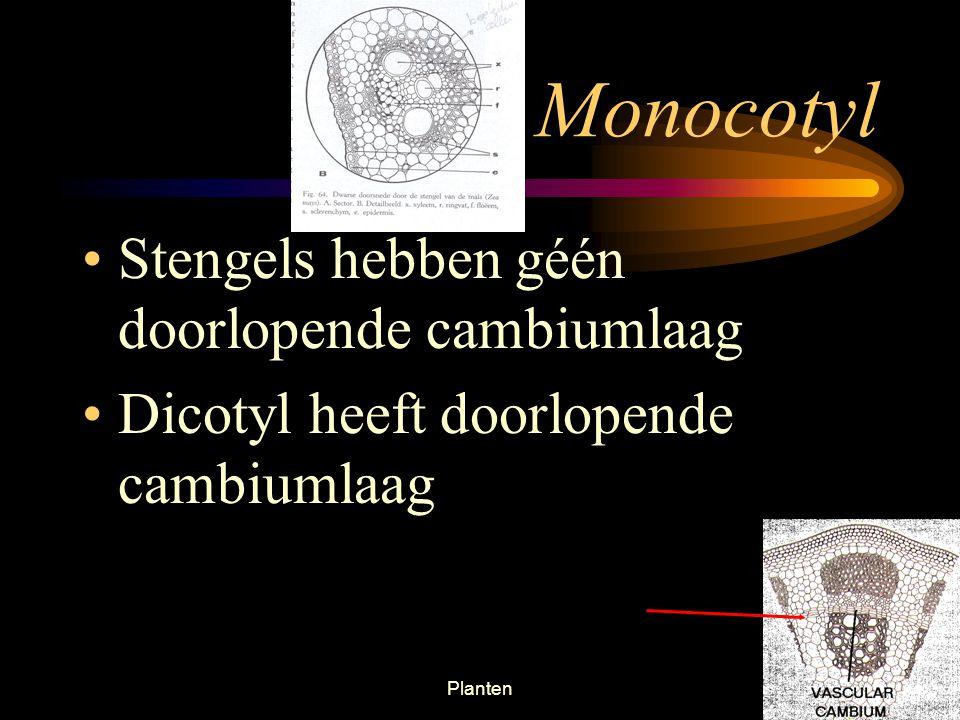Monocotyl Stengels hebben géén doorlopende cambiumlaag