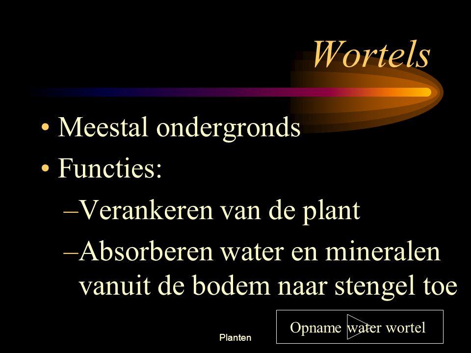 Wortels Meestal ondergronds Functies: Verankeren van de plant