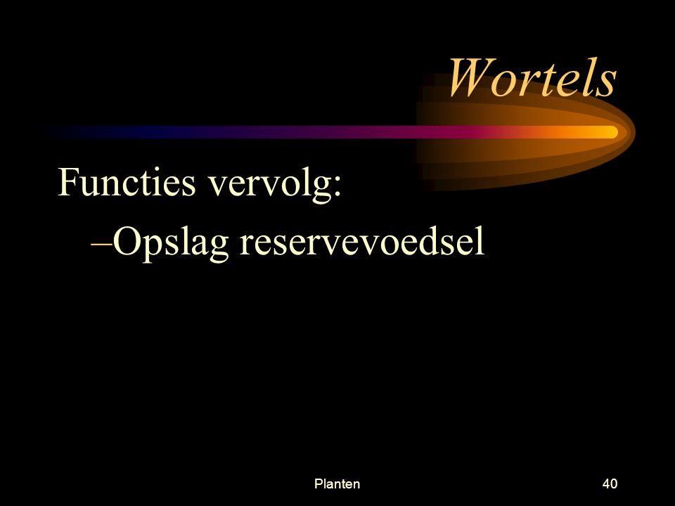 Wortels Functies vervolg: Opslag reservevoedsel Planten