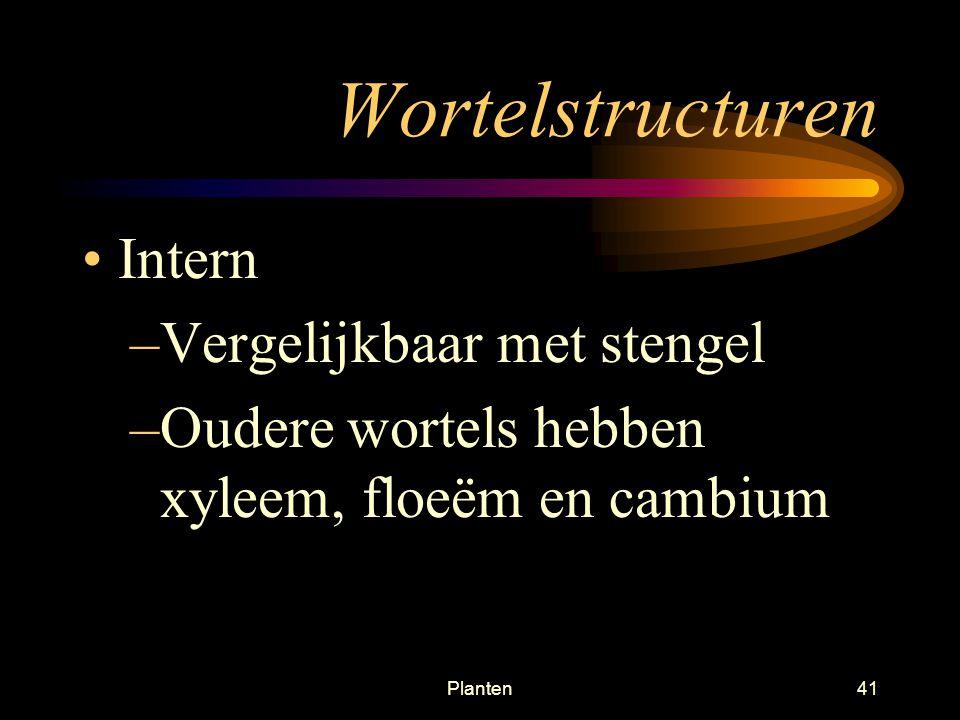 Wortelstructuren Intern Vergelijkbaar met stengel