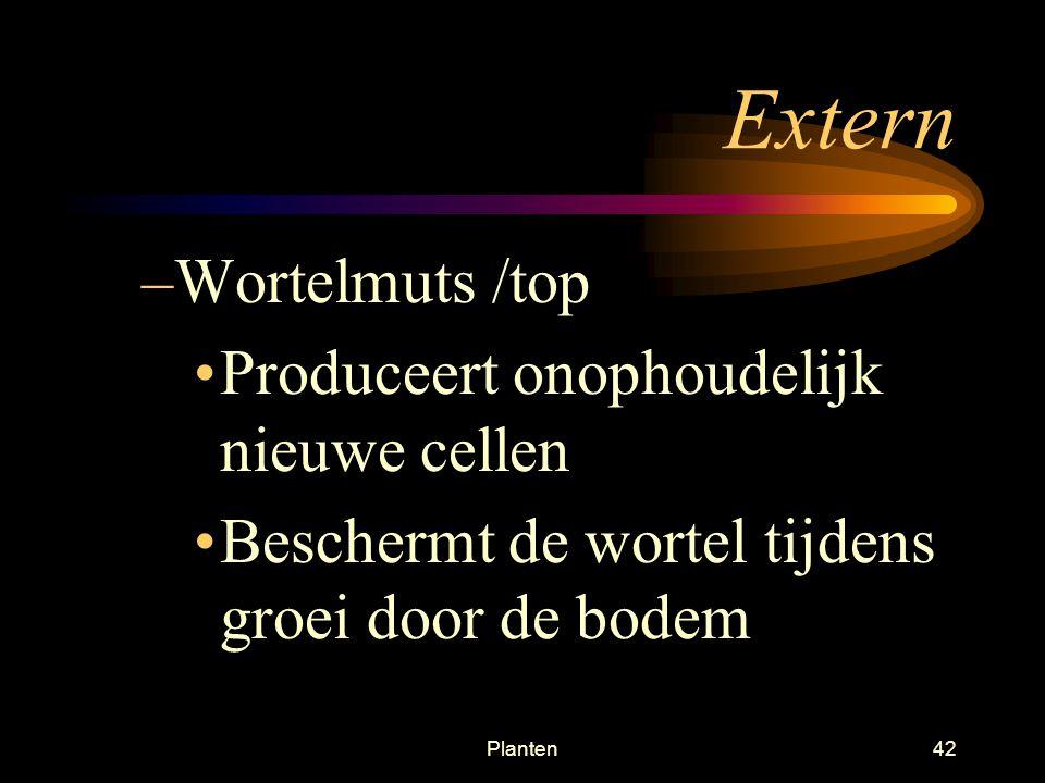 Extern Wortelmuts /top Produceert onophoudelijk nieuwe cellen