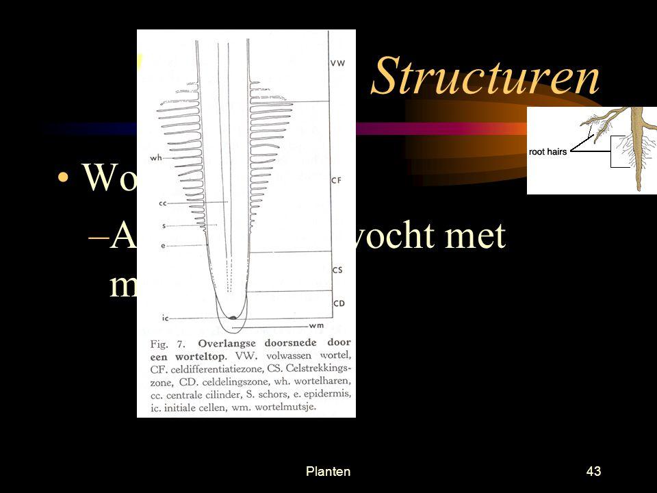 Structuren Wortelharen Absorbtie van vocht met mineralen Planten