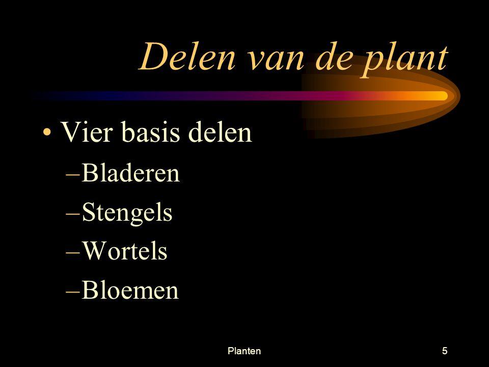 Delen van de plant Vier basis delen Bladeren Stengels Wortels Bloemen