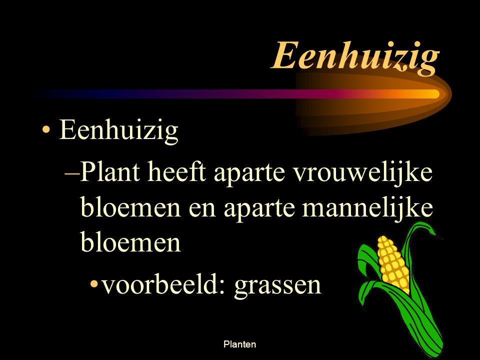 Eenhuizig Eenhuizig. Plant heeft aparte vrouwelijke bloemen en aparte mannelijke bloemen. voorbeeld: grassen.