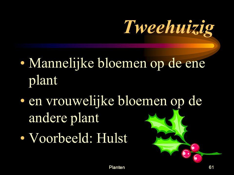 Tweehuizig Mannelijke bloemen op de ene plant
