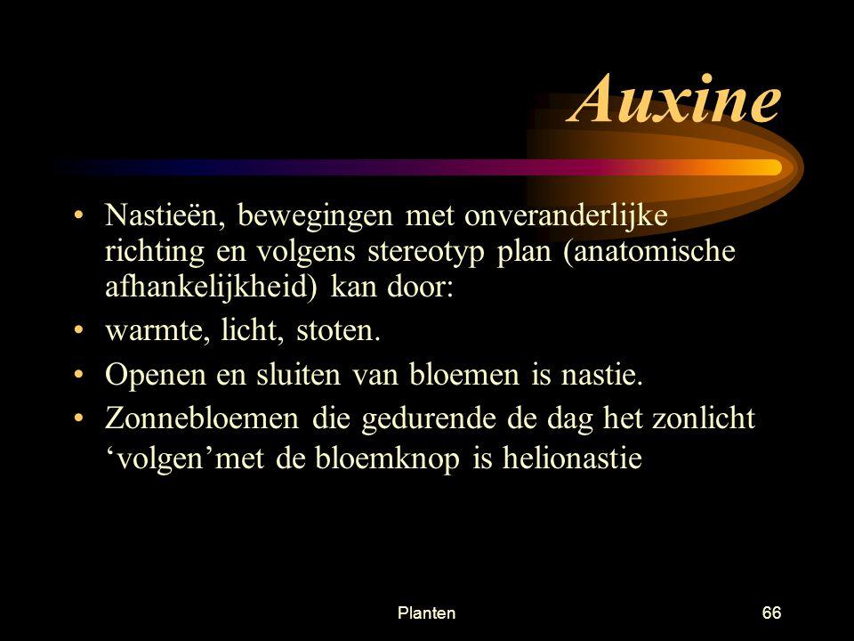 Auxine Nastieën, bewegingen met onveranderlijke richting en volgens stereotyp plan (anatomische afhankelijkheid) kan door: