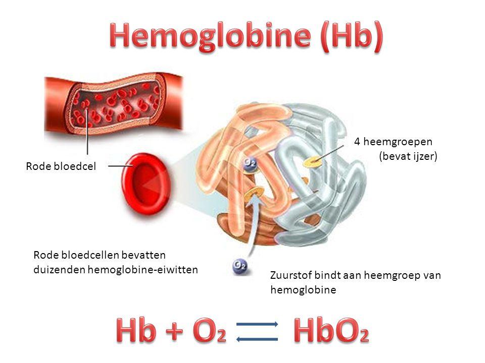 Hemoglobine (Hb) Hb + O2 HbO2