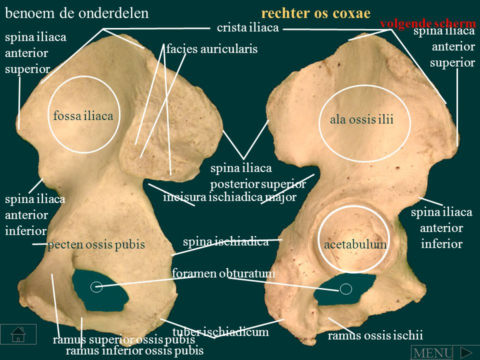 spina iliaca anterior inferior