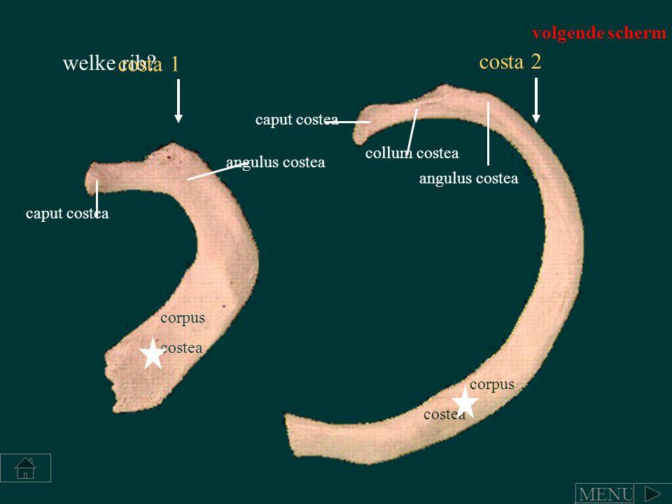 welke rib costa 2 costa 1 volgende scherm MENU caput costea