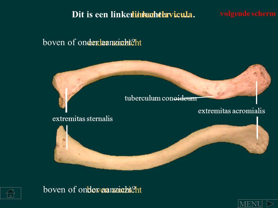 Dit is een linker / rechter ……. linker clavicula