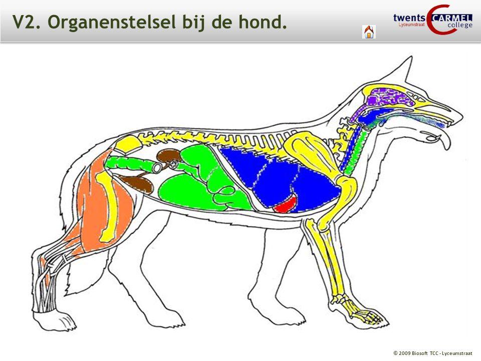 V2. Organenstelsel bij de hond.