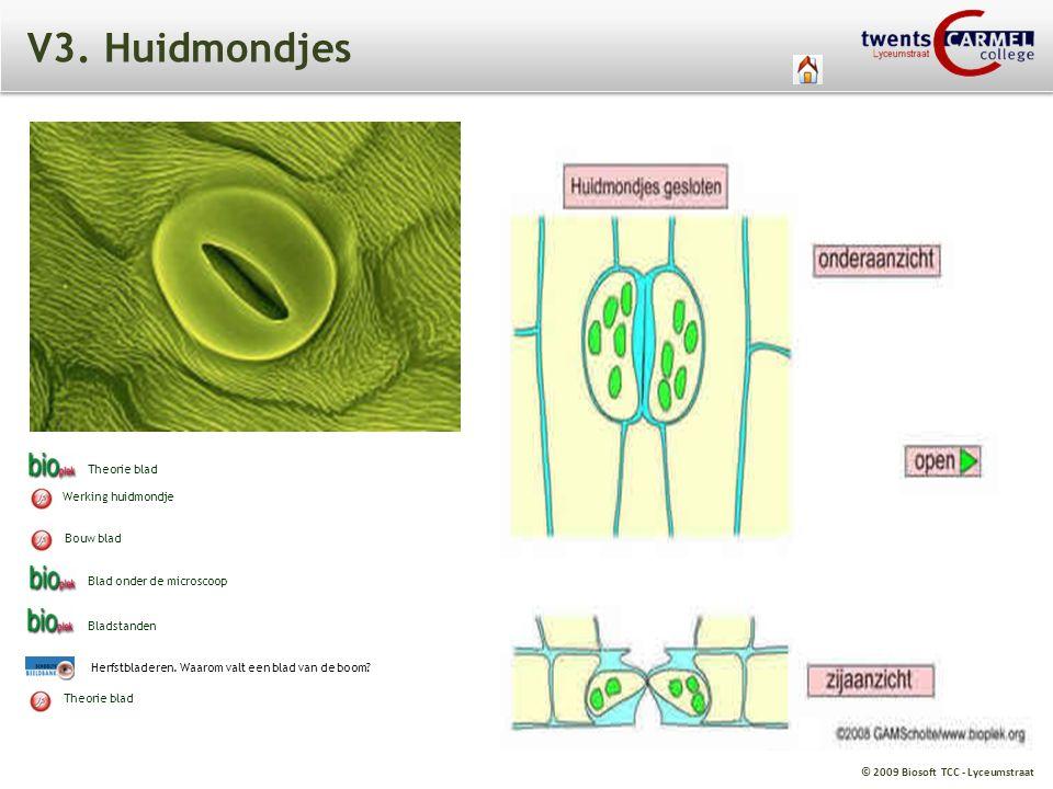 V3. Huidmondjes Theorie blad Werking huidmondje Bouw blad