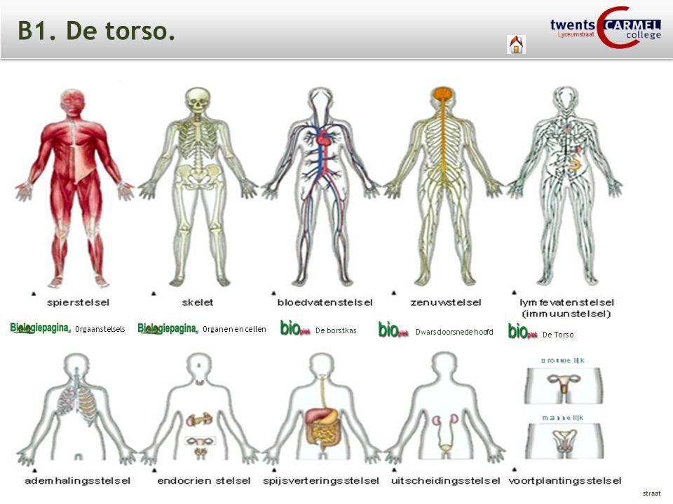 B1. De torso. Orgaanstelsels Organen en cellen De borstkas