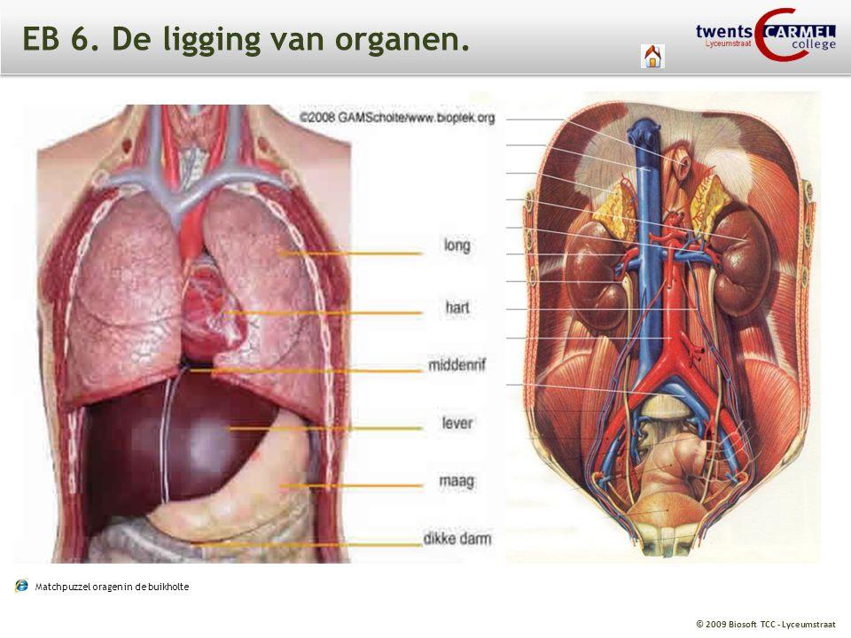 EB 6. De ligging van organen.